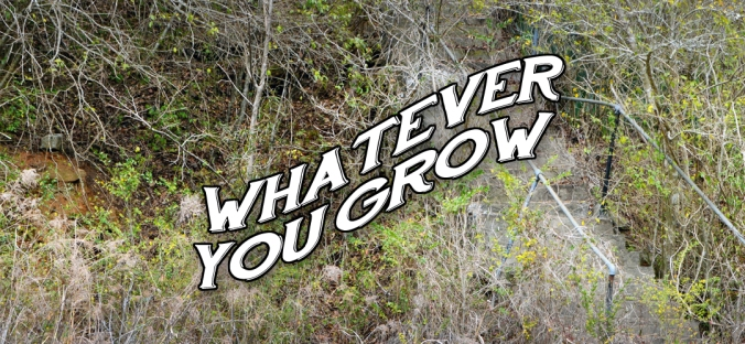 whateveryougrow